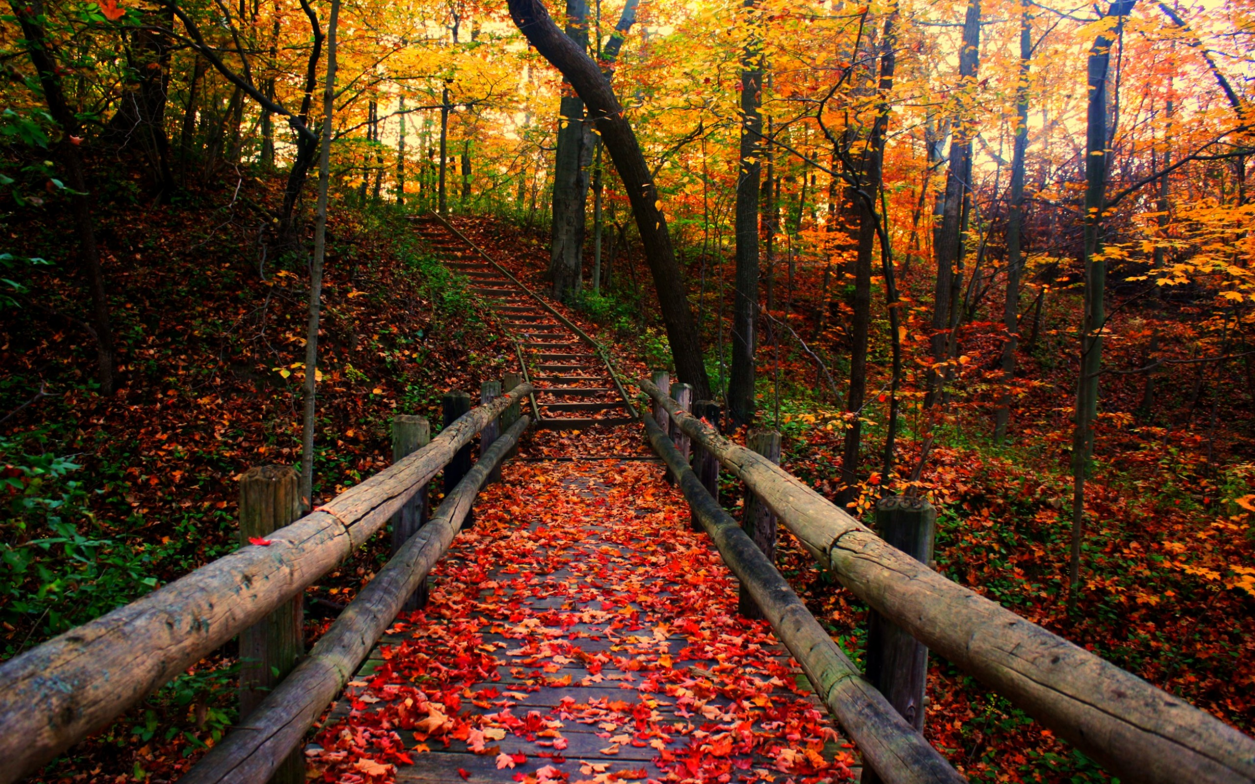 autumn-scenery-wooden-bridge-and-stairs-in-the-forest